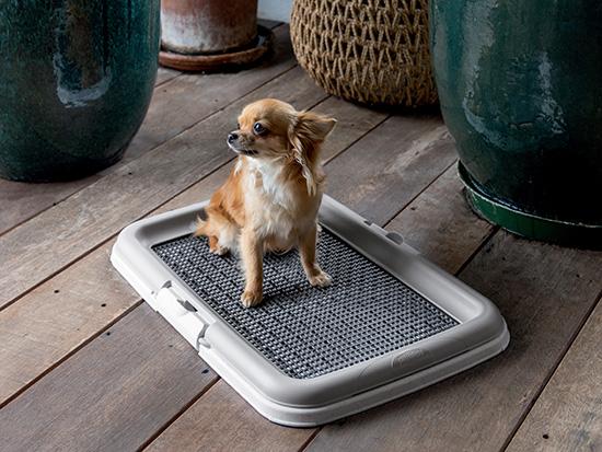 Puppy toilet