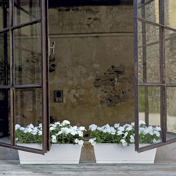 Balconetta Liberty. Vaso con riserva d'acqua